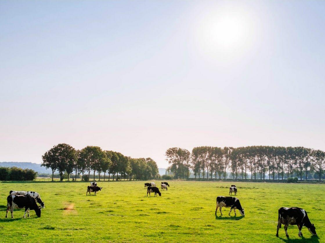 Agriflanders 2019 – Gand